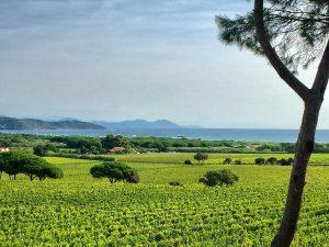 st tropez VIGNOBLE WINE TOURS FRENCH RIVIERA PROVENCE