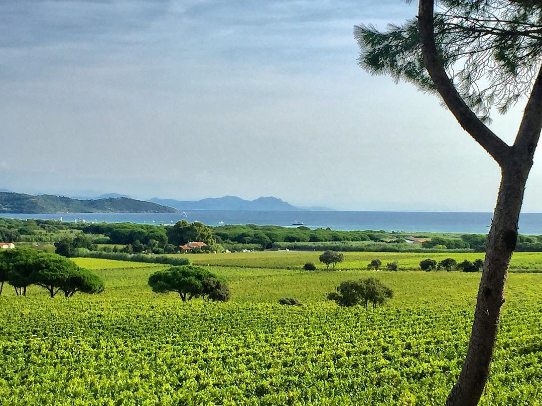 st tropez VIGNOBLE WINE TOURS FRENCH RIVIERA PROVENCE